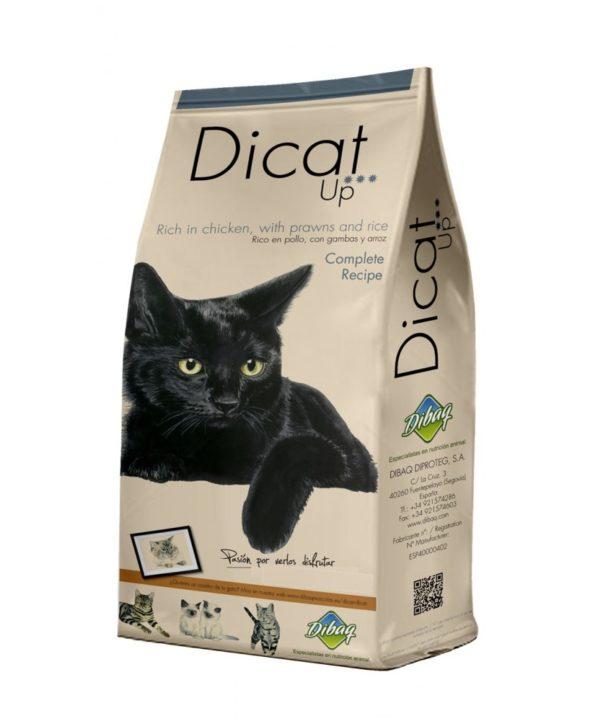 Dibaq Dicat Up Complete Recipe kaku bariba
